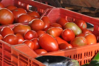 Foto: Assessoria de Imprensa UPF