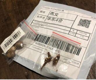 Pacotes não devem ser abertos e nem jogados no lixo, local onde pode ocorrer a germinação das sementes (Gabriel Zapella/Cidasc /Divulgação)