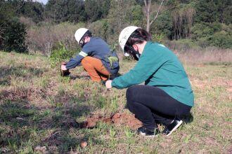 Colaboradores participam do plantio de árvores (Foto: Divulgação BSBIOS)
