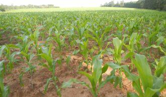 Preparativos estão mais avançados nas regiões onde chuva não umideceu excessivamente o solo (Foto: Divulgação/Emater)