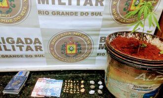 Em revista ao local, além de drogas, policiais encontraram um pé de maconha (Foto: Divulgação/Brigada Militar)