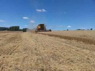 Em algumas regiões, colheita já passou dos 90% (Foto: Divulgação)