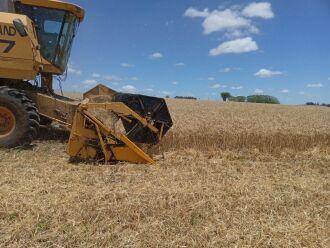 As lavouras que não foram prejudicadas pelas geadas de agosto apresentaram produtividade dentro da expectativa (Foto: Divulgação)
