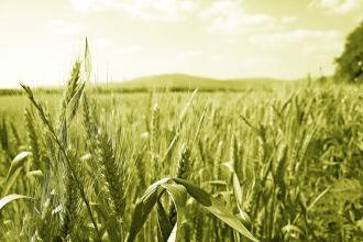 Ideia é dar aporte à produção rural do estado (Foto: Divulgação)