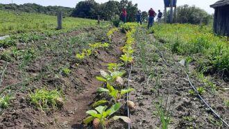 Projetos nas áreas de agricultura familiar, agroindústrias familiares, bovinocultura de leite, correção do solo tiveram destaque (Foto: Divulgação)