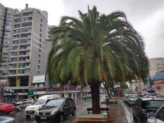 Chuva começou no início da tarde - Foto - LC Schneider-ON