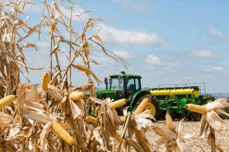 Soja e milho devem ter alta na produção (Foto: Karine Viana/Arquivo Secom/RS)