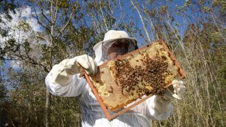 Apicultores têm receio de notificar sobre mortandade de abelhas, pois envolve deriva em áreas de terceiros (Foto: Fernando Dias/Ascom Seapdr)