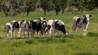 Produtores devem remeter informações sobre todos os animais existentes na propriedade. Foto: Fernando Dias/Ascom Seapdr