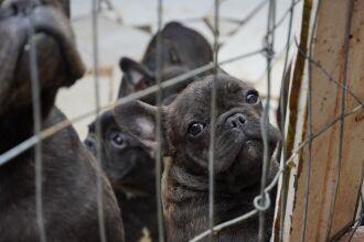 Resgate gerou interesse da população pela adoção dos animais (Foto: Michel Sanderi/Divulgação PMPF)