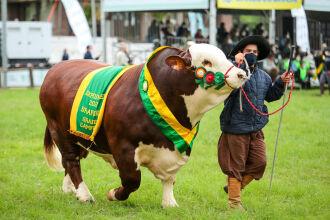 115 animais foram exibidos durante o desfile (Fotos: Gustavo Mansur/ Palácio Piratini)