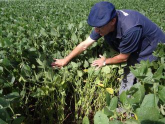 As condições climáticas também impediram uma maior proliferação de pragas, facilitando o controle nas lavouras