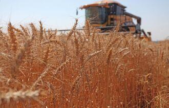 Em quatro décadas, a produtividade do trigo evoluiu dos 650 kg/ha para quase 3 milhões kg/ha em 2016.