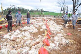 Destruição de dois aviários provocou morte de 15 mil frangos em propriedade de Engenho Grande