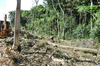 Dezenas de árvores de médio e grande porte foram derrubadas.