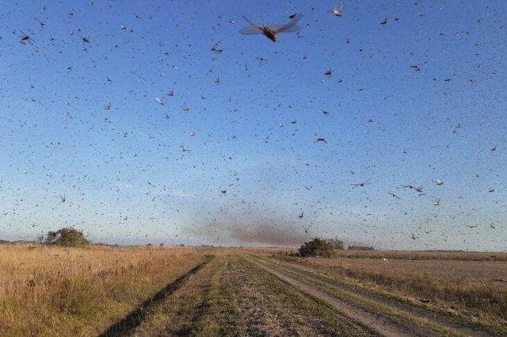 A mídia argentina informa que a nuvem de gafanhotos teria vindo do Paraguai e das províncias de Formosa e Chaco (Foto: Governo de Córdoba)