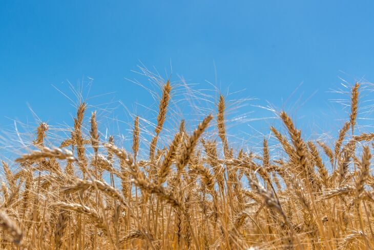 A projeção para a área a ser colhida foi de 65,2 milhões de hectares, crescimento de 3,1% (Foto: Arquivo/Divulgação)