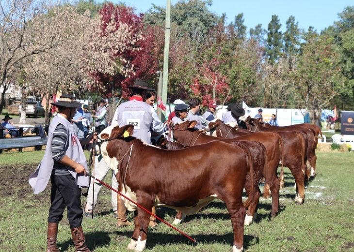 Foto - Everton Marita/La Rural Fotografia-ABHB