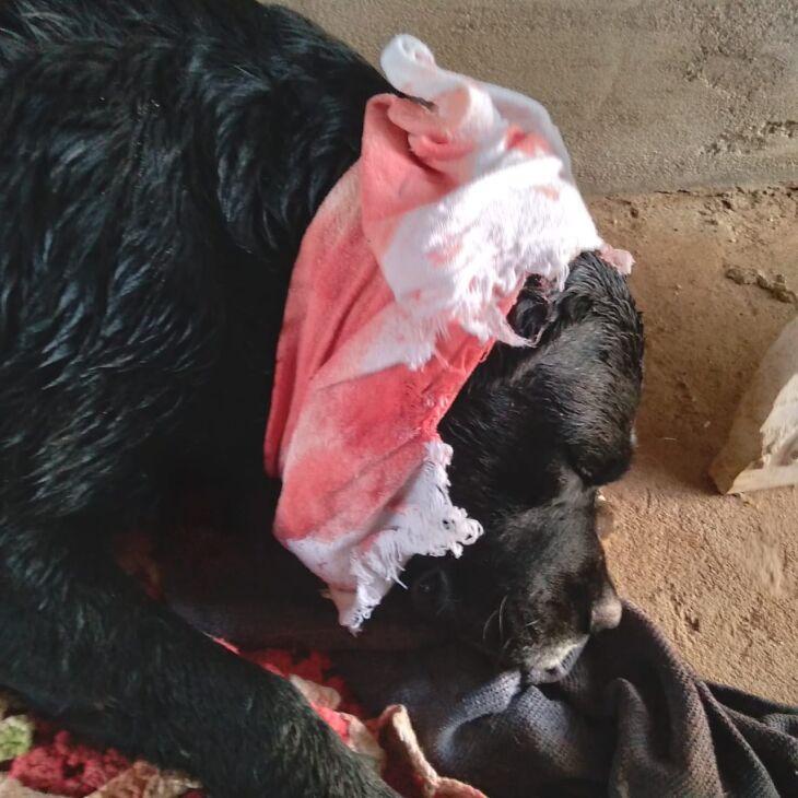 Cão foi socorrido por populares e levado para o Hospital Veterinário
