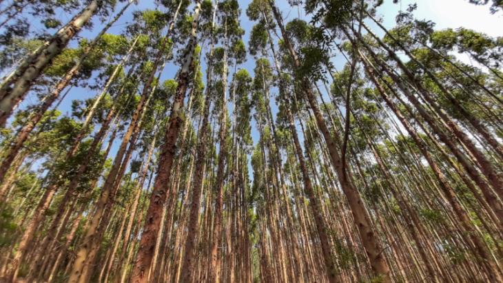 Um dos temas abordados foi a modernização e o aperfeiçoamento do cadastro dos plantios florestais (Foto: Divulgação)