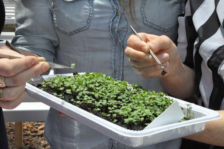 Profissionais da biologia e agronomia estão inovando na produção de hortaliças (Fotos: Jéssica França)