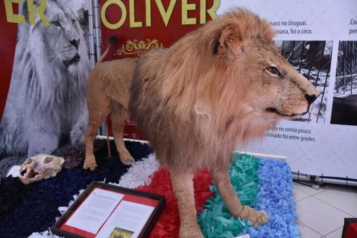 O Muzar conta hoje com coleções de Zoologia, Botânica, Geologia e Paleontologia (Fotos: Caroline Simor)