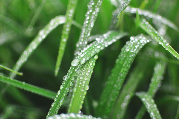 As chuvas contribuíram para o desenvolvimento dos cultivos (Foto: Nikolay Zakharov/Unsplash)