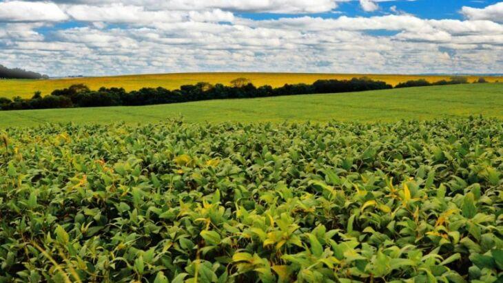 Somente a soja soma 20,2 milhões de toneladas (Foto: Marconi Flach / Especial)