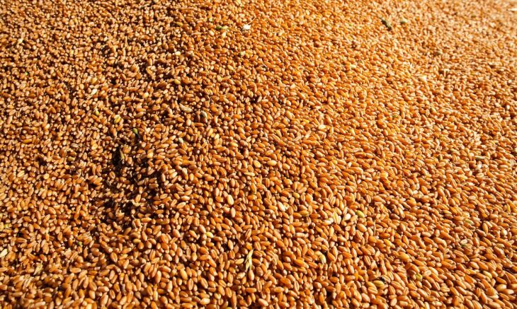 O aumento é de 16,8 milhões de toneladas (Foto: CNA/Wenderson Araújo/Trlux)
