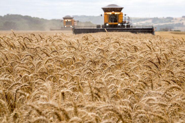 Boa parte do crescimento em área plantada de trigo no RS na safra 2021 se deve ao investimento dos agricultores da metade sul (Foto: Divulgação Biotrigo/Ron Lima)