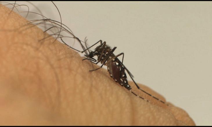 A população pode denunciar espaços suspeitos de foco de Aedes aegypti (Foto: Divulgação/Fiocruz)