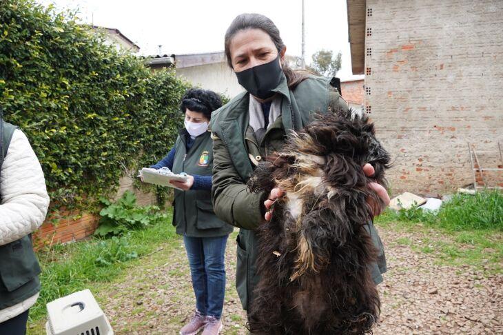 Animais serão levados para clínicas veterinárias (Fotos: Michel Sanderi/Divulgação PMPF)