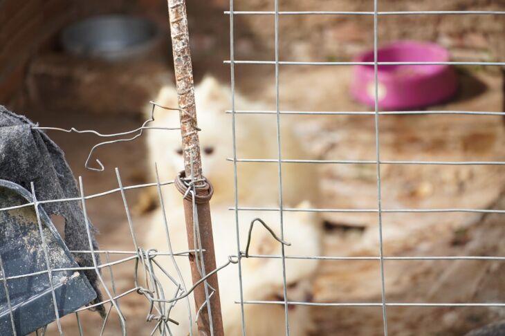 Animais estavam em situação de maus tratos (Foto: Michel Sanderi/Divulgação PMPF)