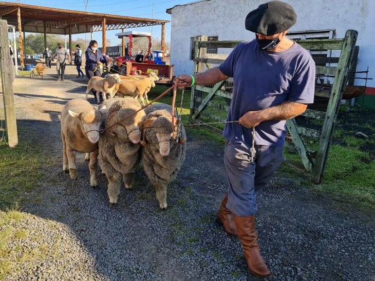 A exposição de animais é um dos atrativos da Feira (Fotos: Itamar Aguiar/ Palácio Piratini)