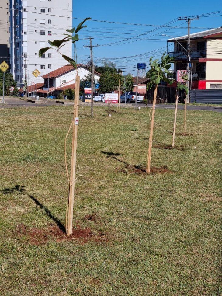 Em abril deste ano foram plantadas 200 mudas (Foto: Divulgação)