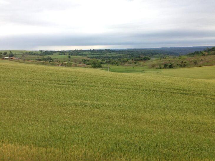 Implantação da lavoura já atinge 80% da área no Estado
