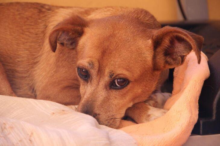 Nica, a cachorrinha que foi abandonada em uma oficina mecânica, adotada pela Andressa