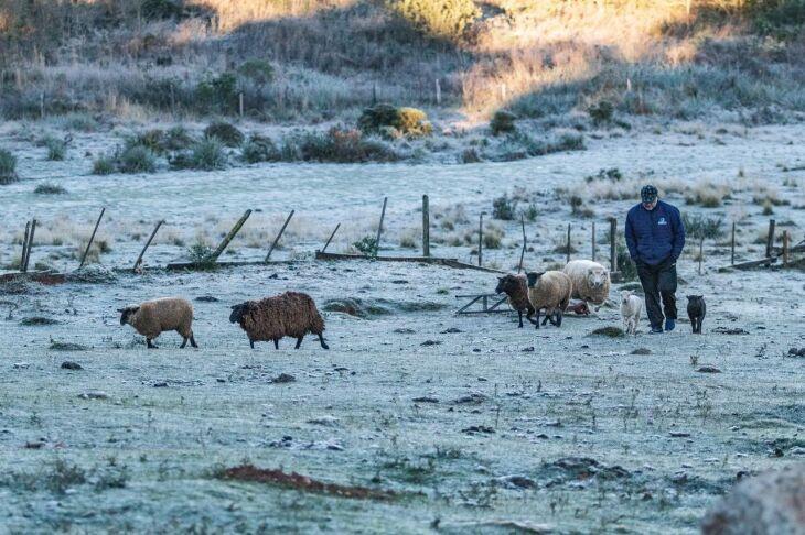 Forte geada cobriu os campos de branco