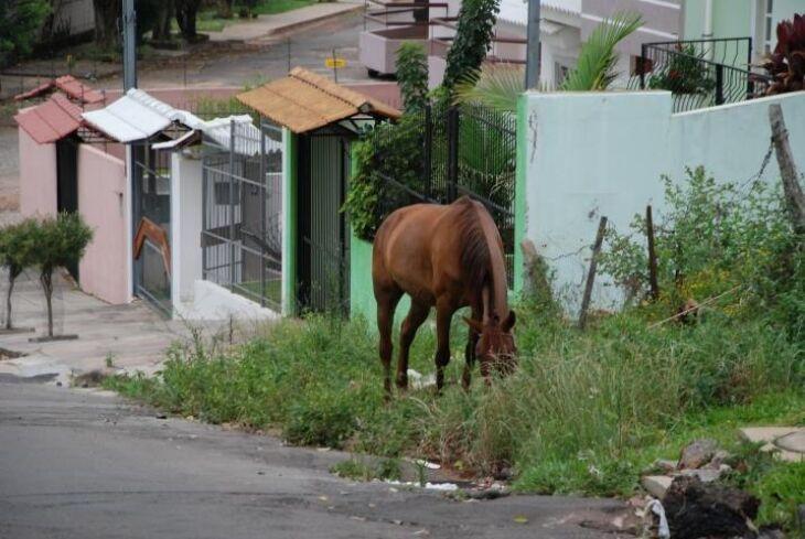 Neste ano foram registrados quatro acidentes evolvendo animais soltos em via pública